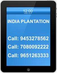 INDIA PLANTATION