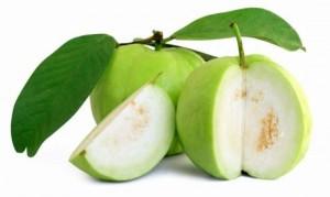 Guava Saplings (L-49)