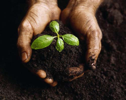 Hands Holding a Seedling and Soil ca. 2000